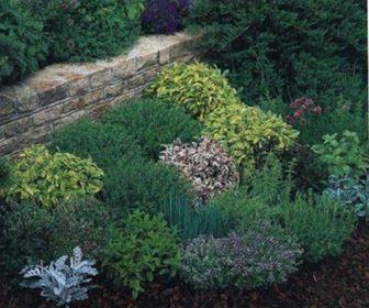 Aromatische Pflanzen