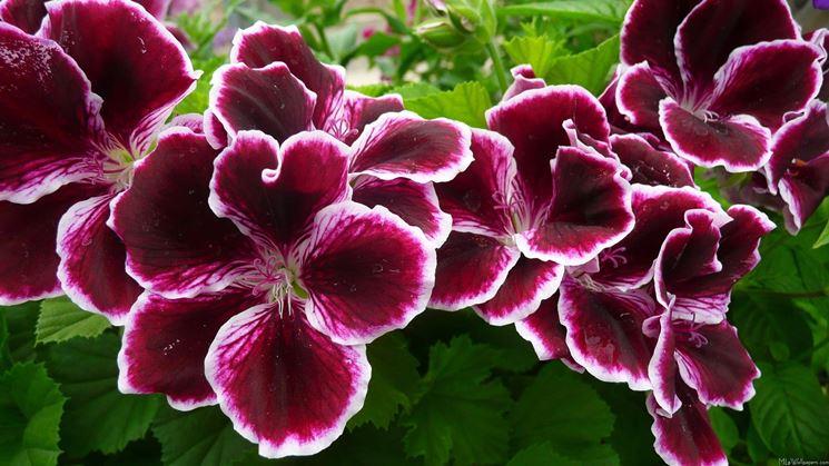 Garten blumen  Gartenblumen - Gartenpflanzen