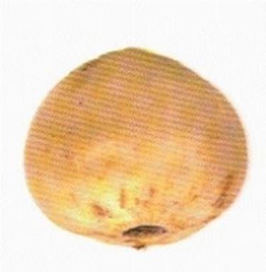 Liliengewächse