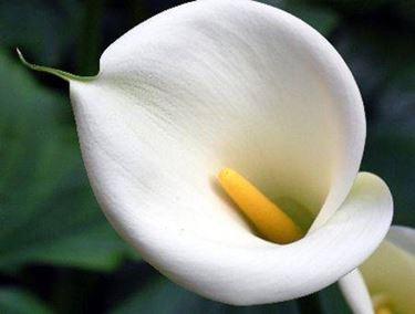Bezaubernde Dekoration für den Gartenteich