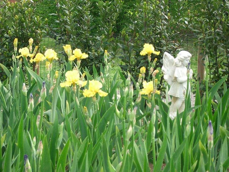 Schwertlilien-Arten