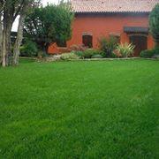 Garten-Rasen