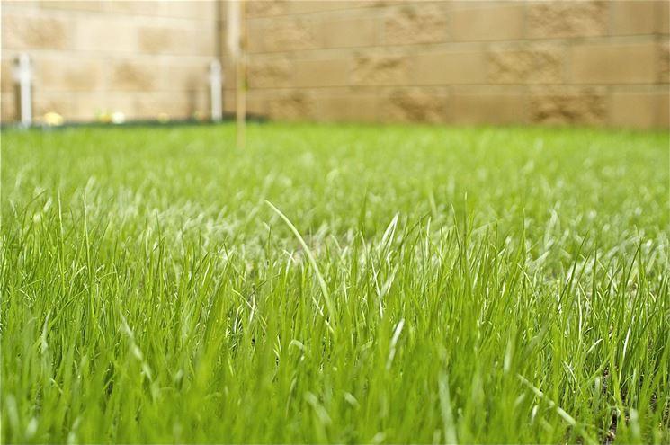 Ein üppiger Rasen braucht viel Wasser