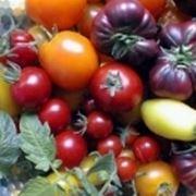 Gemüsesaat