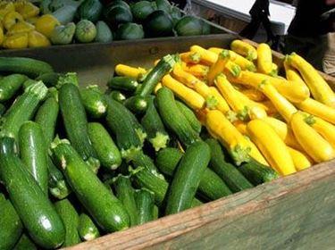 Zucchini-Pflanzen