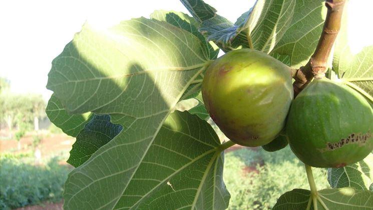 Wenn Blätter und Früchte abfallen