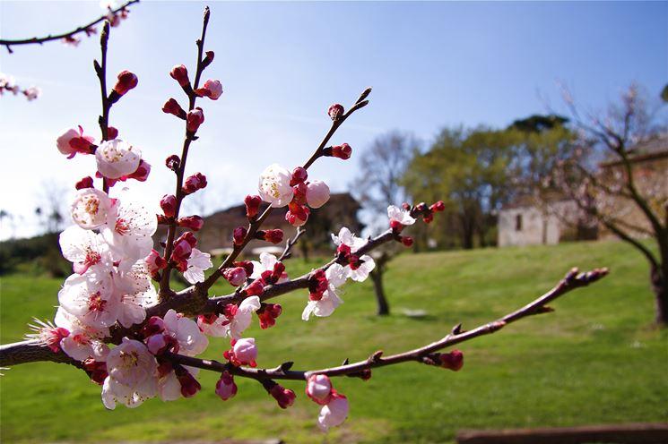 Den Pfirsichbaum einpflanzen