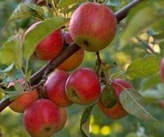Obstgewächse