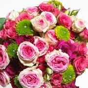 Blumensprache richtig interpretieren