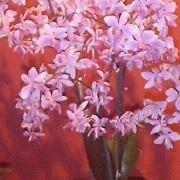 Blumensprache Orchidee
