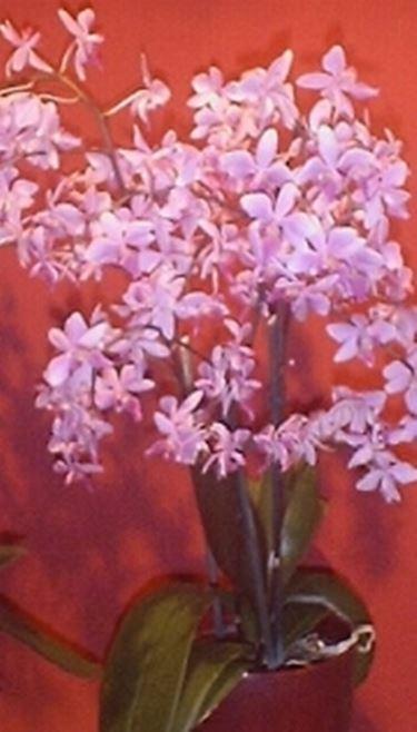 blumensprache orchidee sprache blumen. Black Bedroom Furniture Sets. Home Design Ideas
