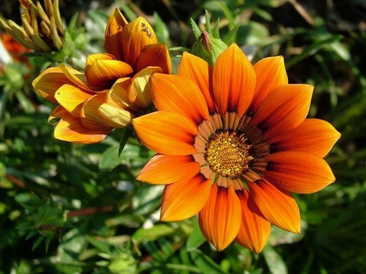 Die Blumensprache