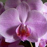 Orchideen kultivieren