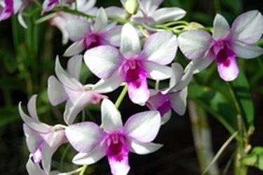Orchideen lieben